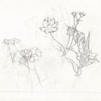 Flowery Sketch(wip 01) by Puillustrated