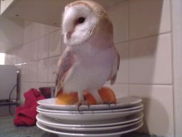 Owl in the house! by EloiseS16