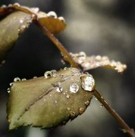 rain drops II by ChrisKora