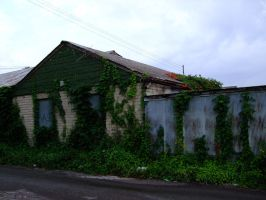 Ivy Covered Building I by Baq-Stock