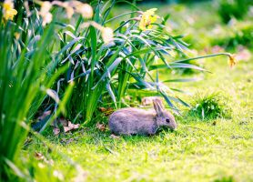 Banquet for a bunny by bexa