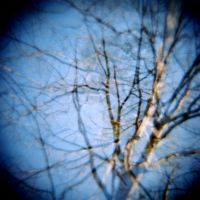 Diana 3 7 Branches by LDFranklin