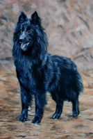 Belgian Sheepdog by Katie-Z