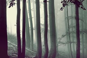 misty forest by linde-lu