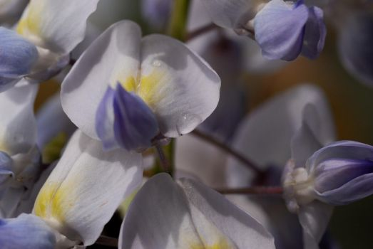 Unknown Blossoms by Bodenlos