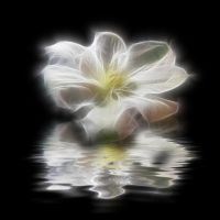 Fantasy FX Flower Stock 5 by Moonchilde-Stock