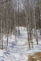 Ravine Path - Winter 5 by Stickfishies-Stock