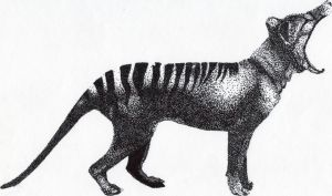 Thylacine Triptych - Stippling by TheNuclearShark