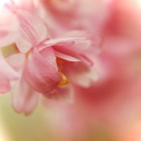 Softly Surprising by JVarriano