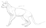 Sphinx cat sketch by ivygreane