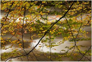 beech flow by sassaputzin