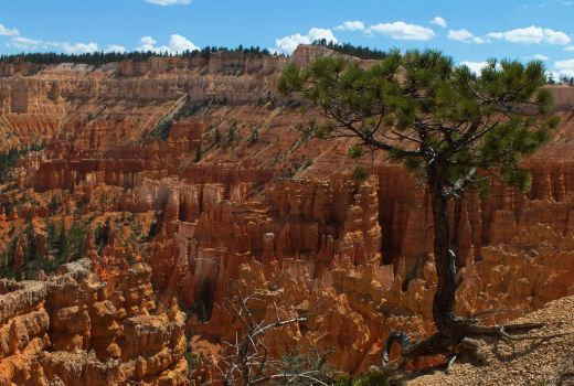 Bryce Canyon Nationalpark by DontEverLookDown