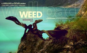 WEED -wall.pack- by ehsania