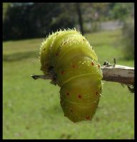 Caterpillar by Laurie4000