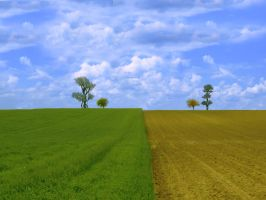 Field Trees 7852887 by StockProject1