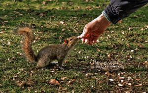 Gimme Nuts II by ERB20