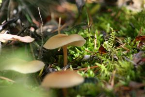 autumn mushrooms by nicelandscape