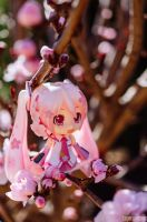Sakura Miku by stereometric