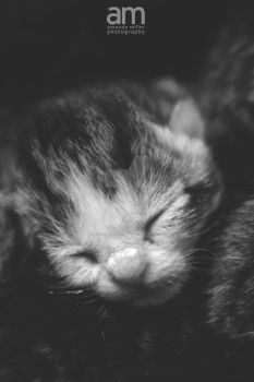 tiny tabby ii by mrsselfdestruct