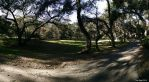 Forest Road Panorama by decophoto32