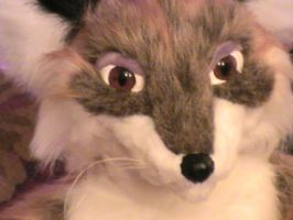 Closeup of foxy face by Blaquetygriss