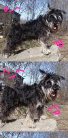 Dog_emotions by Alice-Coal