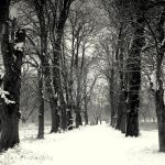 Snow woodlands by lostknightkg