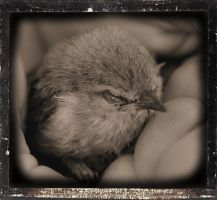 Baby Bird by ria001