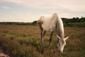 Wild Pony in Meadow by lorni3