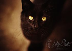 Those Eyes by Adkins-Photography