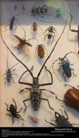 Assorted Insects Stock 3 by Melyssah6-Stock