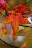 Autumn leaves 2 by TheEtherealSoul