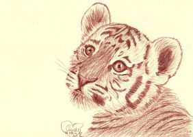 Baby Tiger by Cindy-R