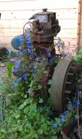 Abandoned beauties of the garden with rust. 2of12 by TERABBS