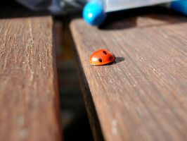 Ladybird 1 by HoLLyp0p
