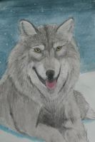 Wolf in the snow in the night redone by artifexus