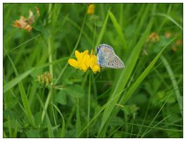 Butterfly 6a by schnegge1984