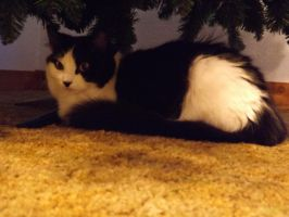 Yuki Under The Christmas Tree by DarlingChristie