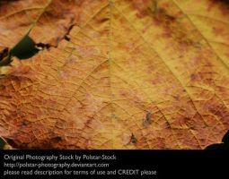 Leaf Texture 1 by Polstar-Stock
