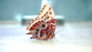 Butterfly2 by oxygun