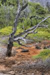 Galapagos Swamp HDR by AaronPlotkinPhoto