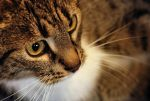 just a cat III by Wilithin