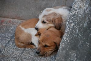 Puppies by Raghavpandey