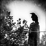the watcher by Weissglut