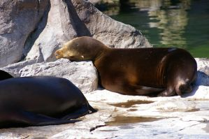 Seals III by expression-stock