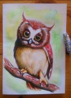 Little owl watercolour by EmiliaPaw5