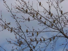 So Many Birds...So Few Branches by KYghost