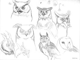 owl sketches by bbshrimp