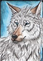 ACEO-Tatchit by Cally-Dream