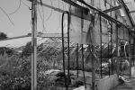 Greenhouse / Gewaechshaus 5 by bluesgrass